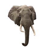 Elephant Mount Vinyl Wall Decal