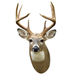 White Tail Deer Mount Vinyl Wall Decal