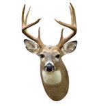 White Tail Deer Mount Vinyl Wall Decal