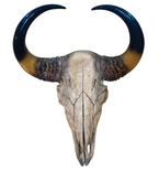 Shiny Bull Skull Vinyl Wall Decal