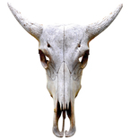 Traditional Antelope Bull Skull Mount Vinyl Wall Decal