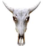 Traditional Antelope Bull Skull Mount Vinyl Wall Decal