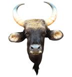 Rounded Horn Bull Mount Vinyl Wall Decal