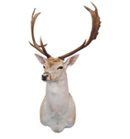 Noble Buck Mount Vinyl Wall Decal