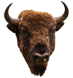 American Bison Mount Vinyl Wall Decal