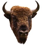 American Bison Mount Vinyl Wall Decal