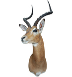Traditional Antelope Mount Vinyl Wall Decal