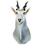 Small Horned White Antelope Mount Vinyl Wall Decal