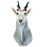 Small Horned White Antelope Mount Vinyl Wall Decal