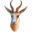 Cute Antelope Mount Vinyl Wall Decal