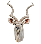Greater Kudu Antelope Mount Vinyl Wall Decal