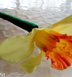 Daffodil flower pen