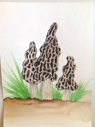 Morel Family Portrait  Original Watercolor Painting Woodland Mycology Art ~ Ready to Ship