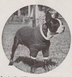 Knitted Dog Sweater- Vintage Knitting Pattern - 1930's Original for Medium Size dog (39A79)
