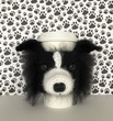 Border Collie Mug Cozy