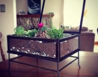 DIY Easy Succulent Terrarium (Free Tutorial)