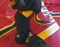Dog costume - 49er jersey