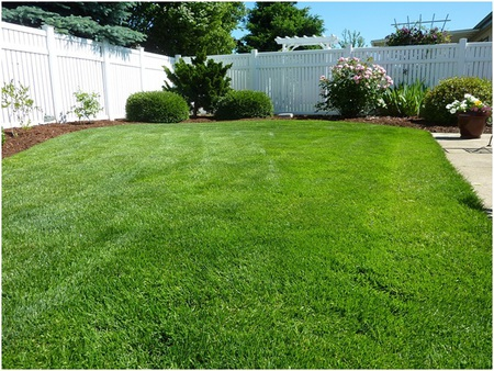 Lawn Care to Deal with the Common Lawn Troubles