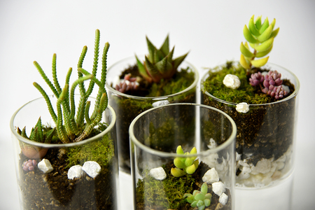 Adorable DIY Terrarium