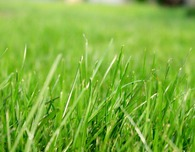How to care for a new lawn