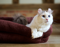 How to choose the best bed for your cat?