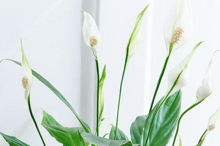 7 Low Maintenance Indoor House Plants