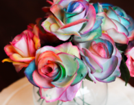 Painting Rainbow Roses
