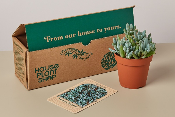 Photo for Box Insider article 13 Best Plant Subscription Boxes to Grow Your Green Thumb