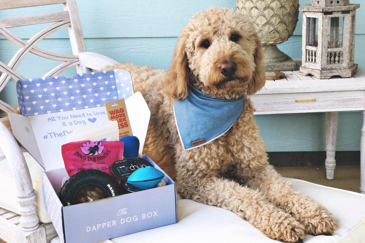 & The Dapper Dog Box | Monthly Dog Subscription Box | Cratejoy Aboutintivar.Com