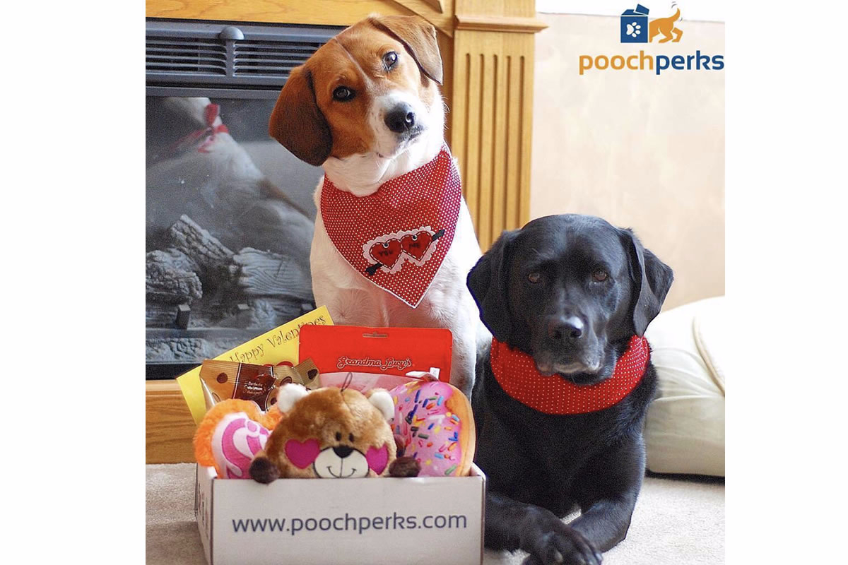 Pooch Perks Premium Customized Dog Boxes
