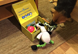 Dog sniffing his dog toys and treats from Surprise My Pet