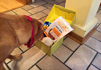 Monthly subscription box for dogs