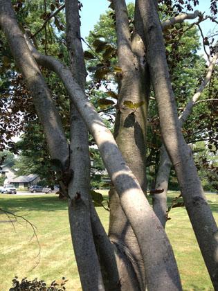 tree-services-14