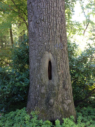 tree-services-8