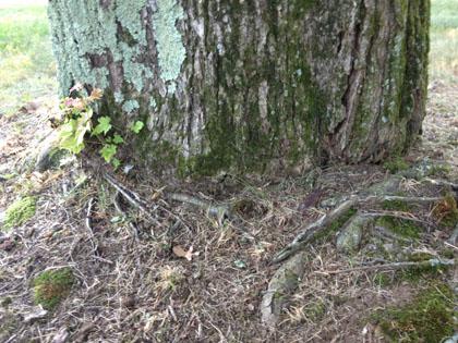 tree-services-5