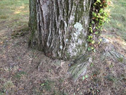 tree-services-4