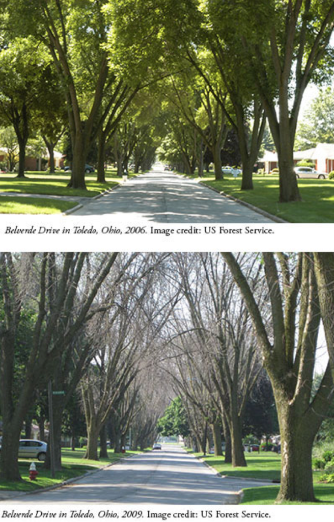 Before & After EAB