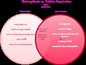 Photosynthesis Vs Cellular Respiration Editable Venn