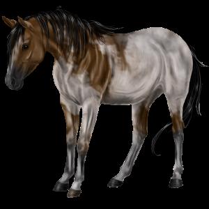 Pony Kerry Bog Dark bay Tobiano