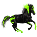 Riding Horse Thoroughbred Black
