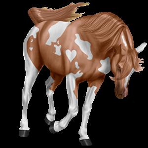 Ridhäst Paint Horse Körsbärsbrun tobiano