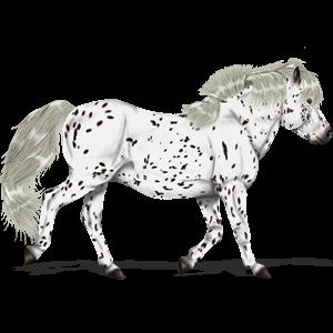 Pegasus Connemara Kirsebærbrun