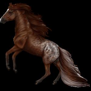Riding Horse Vanner Cherry bay Tobiano