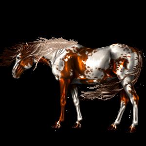 Riding Horse Nokota Bay Overo
