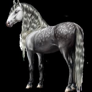 Riding Horse Purebred Spanish Horse Dapple Grey