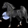 Riding Horse Icelandic horse Cremello