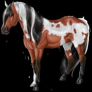 Riding Horse Vanner Chestnut Tobiano