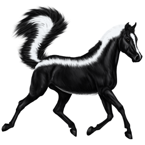 Riding Horse Lusitano Dark Bay