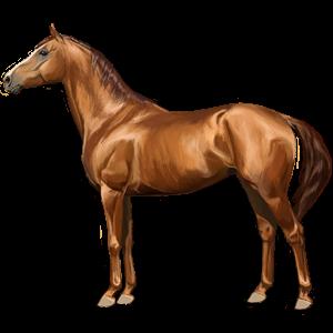 Riding Horse Hanoverian Liver chestnut