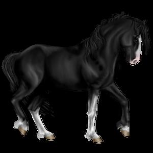 Pegasus-ponny Connemara Svart